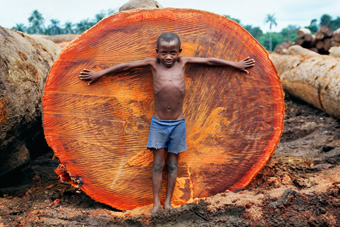 DEFORESTATION, NIGERIA. Child in front of ironwood tree trunk